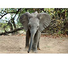 DON'T COME ANY CLOSER! -THE AFRICAN ELEPHANT – Loxodonta Africana Photographic Print