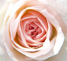 Pink Flower Up Close and Personal by Geoffrey