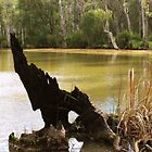 Old Stumpy by Lozzar Landscape