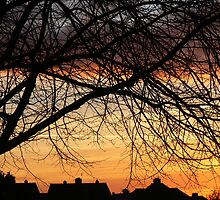 Winter Sunset by fenster