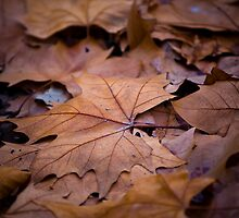 Autumn leaves by Vasco Caldeira