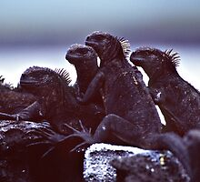 Marine Iguanas by Doug Thost