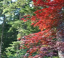 Alaska Maple and Fir by EarthAnime