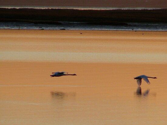 Sunset 1 11-12-07 by Sharon Perrett