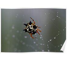 Jewel Spider 1 Poster