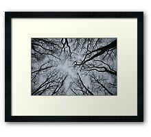 Root or Branch v 01 : Photography by Alys Griffiths Framed Print