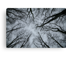Root or Branch v 01 : Photography by Alys Griffiths Canvas Print