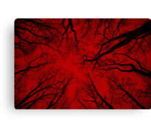 Root or Branch v 05 : Photography by Alys Griffiths Canvas Print
