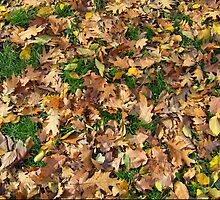 Fallen Leaves by Luca Mancinelli