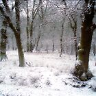 Frozen by James Stevens