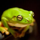 Green Tree Frog by PhotoBull