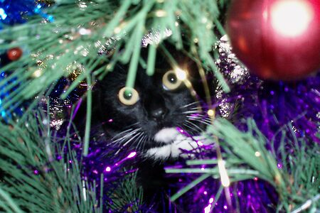 Me? I'm just decorating the tree!
