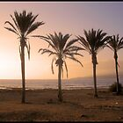 Four Palms.. by Melissa Contreras