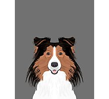 Jordan - Shetland Sheep Dog gifts for sheltie owners and dog people gift ideas perfect dog gifts Photographic Print