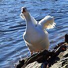White Goose....... by lynn carter