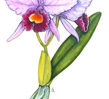 The Orchid Of Love - Cattleya labiata by Sue Abonyi