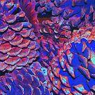 Pine Cones by Ferguson