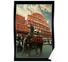 Elephant at Hawa Mahal Poster