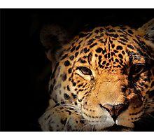 Jaguar Watching Photographic Print