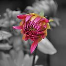 Hints of Color in a Black and White World 2012 by Jen Waltmon