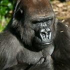 Female Gorilla by James Troi