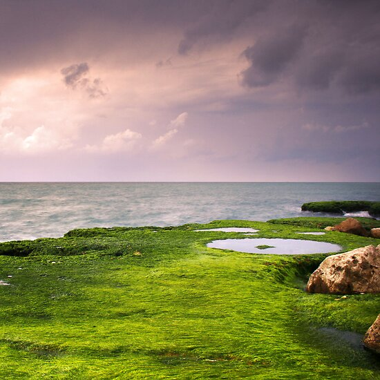 The Green Sea by Tony Elieh