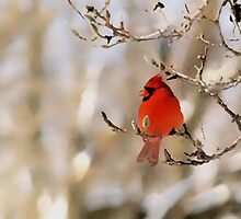 in red by Gaby Swanson  Photography
