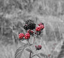 Blackberries by Stuart Gray