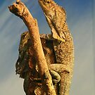 Frilled Lizards by Sara Lamond