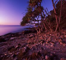 pandanus light - Noosa by Tony Middleton