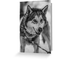Finland Husky Greeting Card