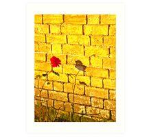 Single Red Rose.. Art Print
