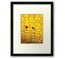 Single Red Rose.. Framed Print