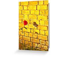 Single Red Rose.. Greeting Card