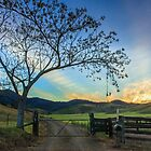 At the Gate - Gloucester NSW Australia by Beth  Wode
