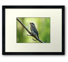 Little Chirping Bluebird Framed Print