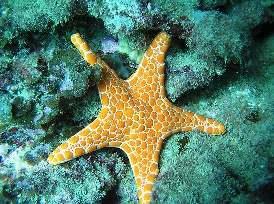 Starfish by MuscularTeeth
