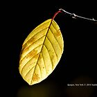 Yellow Leaf - Quogue, New York  by © Sophie W. Smith