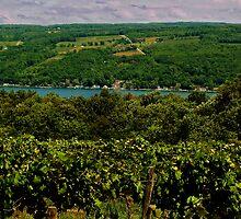 Keuka Lake Grape Vineyard by Cheri Perry