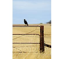 Australian Country Life Photographic Print