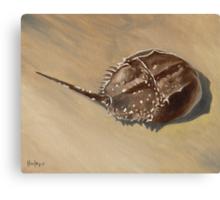 Stranded - Horseshoe Crab Canvas Print
