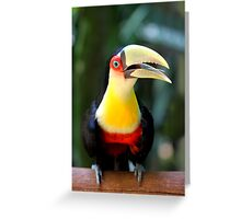 Red Breasted Toucan at Iguassu, Brazil  Greeting Card