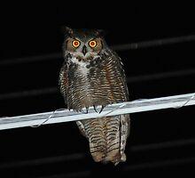owl by 3rdeye