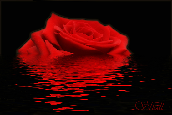 Drowning Rose by shall
