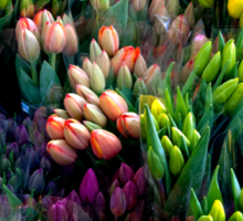 Bunches of Tulips Sticker