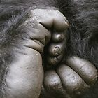 Gorilla Feet by Steve Bulford