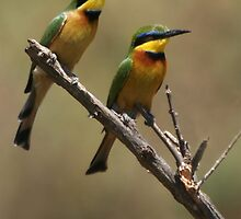 Little Bee Eaters by Steve Bulford