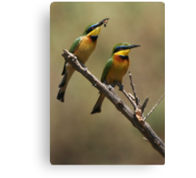 Little Bee Eaters Canvas Print