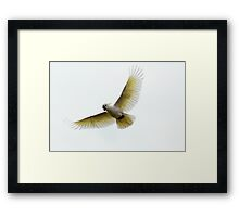 Master of the Air Framed Print