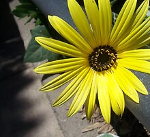 flower at the San Diego Zoo by cheychey